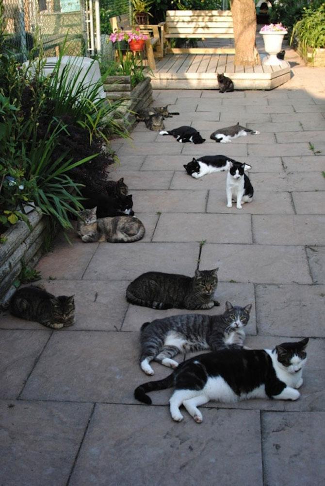 Invazia animalelor: 15 poze adorabile - Poza 1