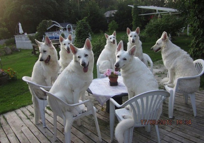 Invazia animalelor: 15 poze adorabile - Poza 4