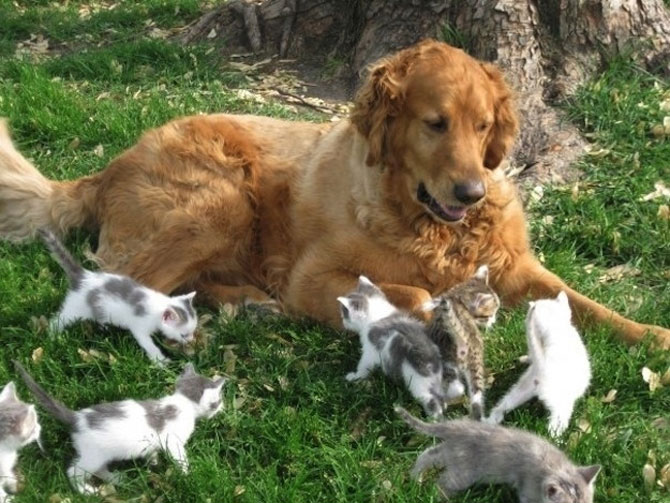 Invazia animalelor: 15 poze adorabile - Poza 6