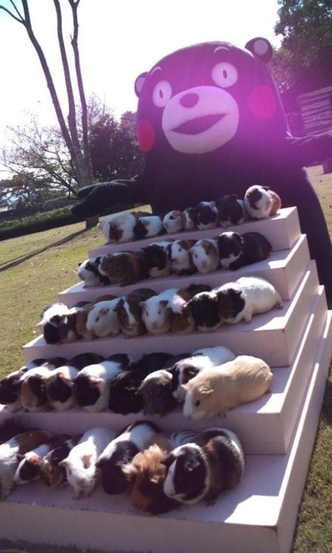 Invazia animalelor: 15 poze adorabile - Poza 7