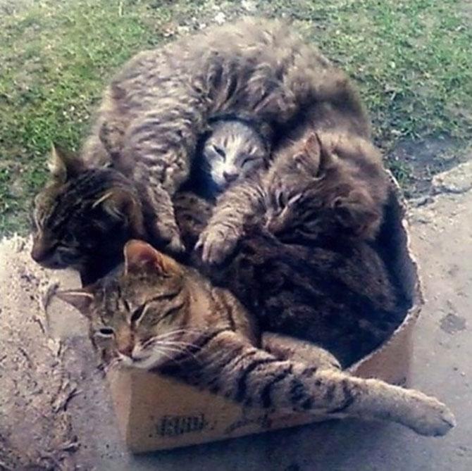 Invazia animalelor: 15 poze adorabile - Poza 9
