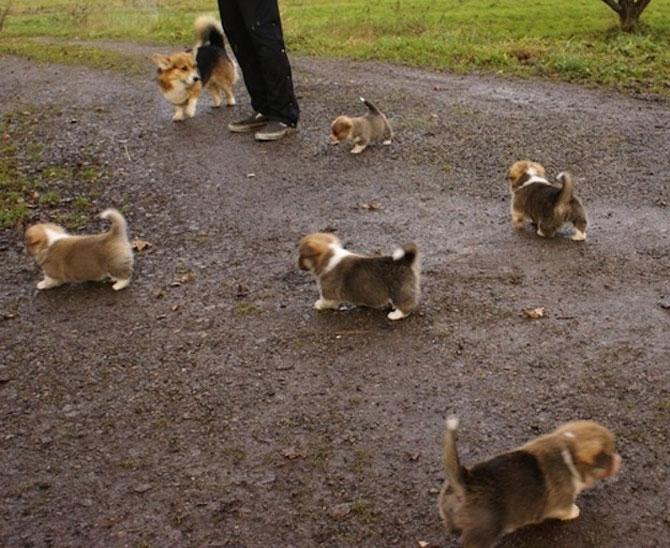 Invazia animalelor: 15 poze adorabile - Poza 10