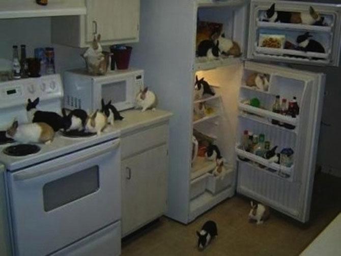 Invazia animalelor: 15 poze adorabile - Poza 12