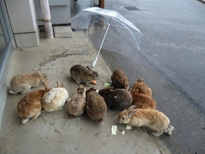 Invazia animalelor: 15 poze adorabile - Poza 13