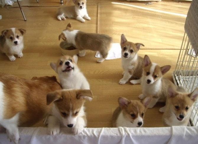 Invazia animalelor: 15 poze adorabile - Poza 14