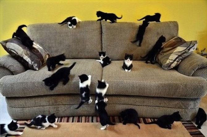 Invazia animalelor: 15 poze adorabile - Poza 15