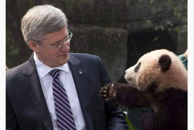 Viata unui urs panda e o mare vacanta! - Poza 2