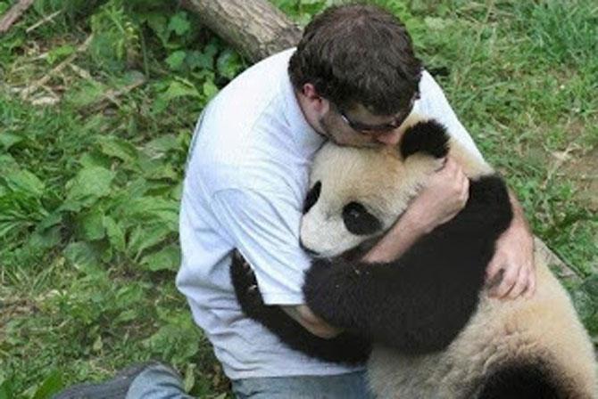 Viata unui urs panda e o mare vacanta! - Poza 10