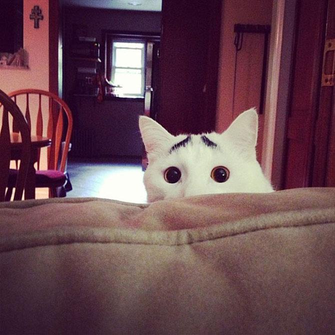 10 pisici celebre pentru blana lor - Poza 1