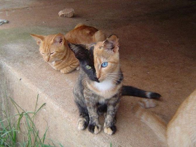 10 pisici celebre pentru blana lor - Poza 2