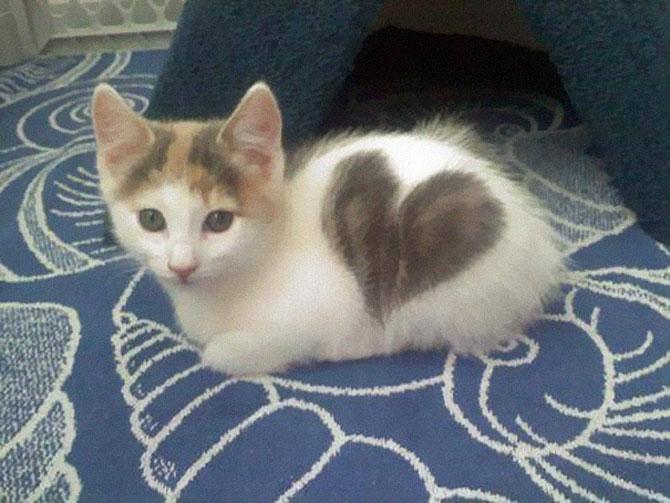 10 pisici celebre pentru blana lor - Poza 4