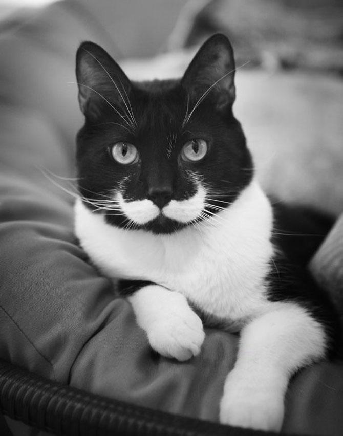10 pisici celebre pentru blana lor - Poza 5