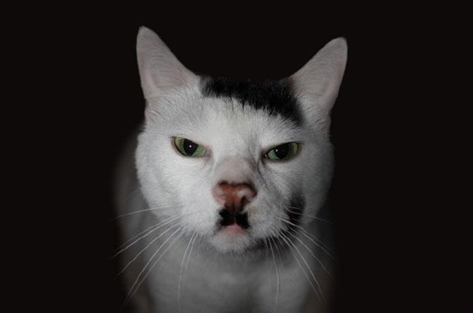 10 pisici celebre pentru blana lor - Poza 6