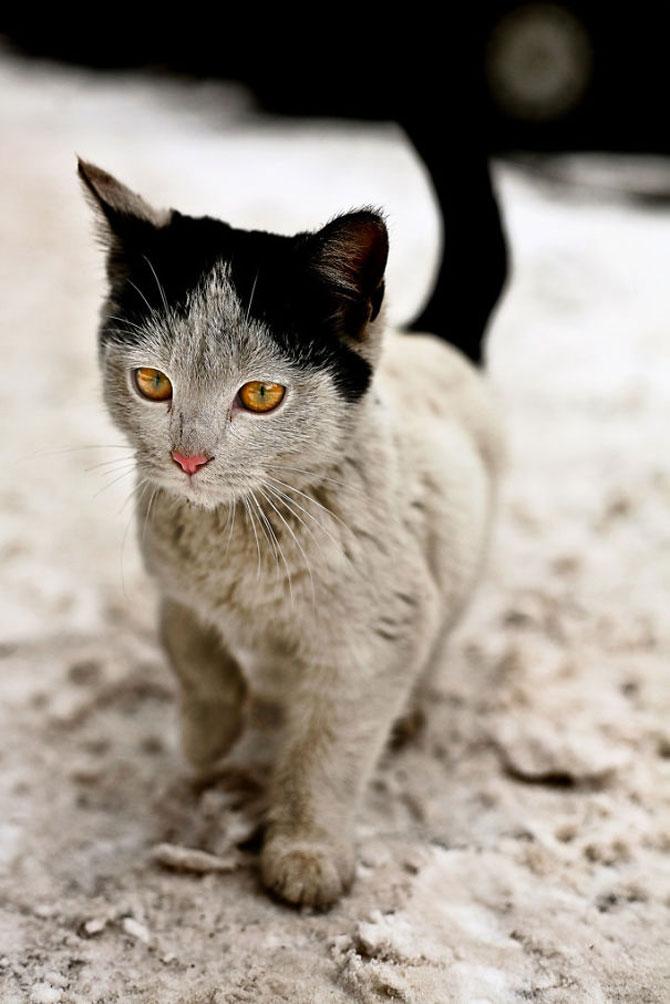 10 pisici celebre pentru blana lor - Poza 7