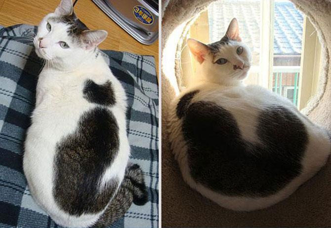 10 pisici celebre pentru blana lor - Poza 10