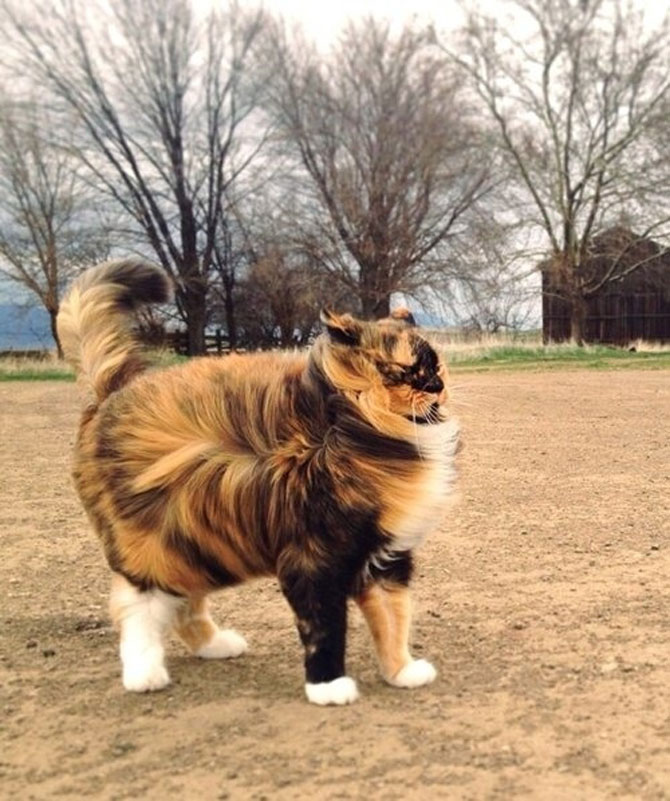 10 feline super-vedete! - Poza 1