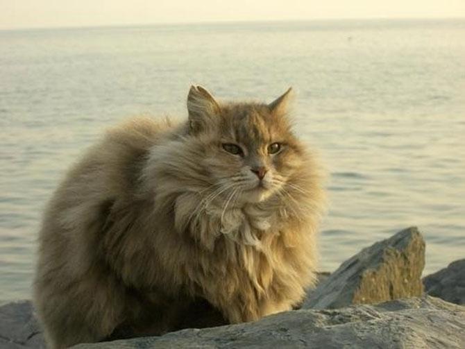 10 feline super-vedete! - Poza 4