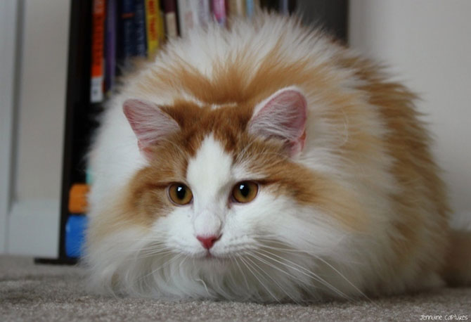 10 feline super-vedete! - Poza 5
