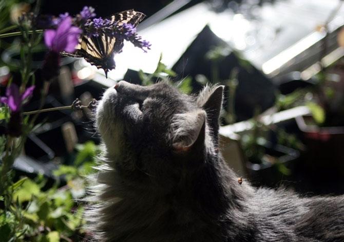 10 feline super-vedete! - Poza 6