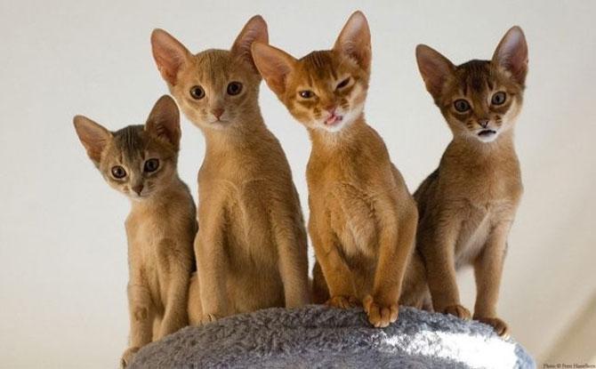 10 feline super-vedete! - Poza 7