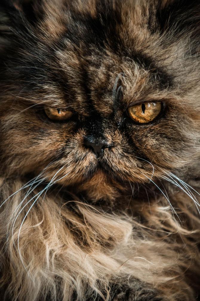 10 feline super-vedete! - Poza 8