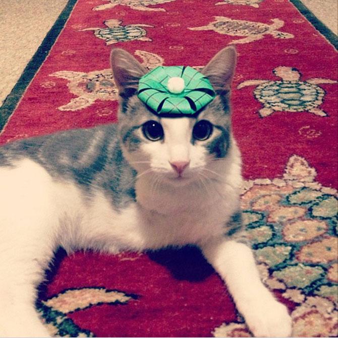 10 pisici cu palarie! - Poza 2
