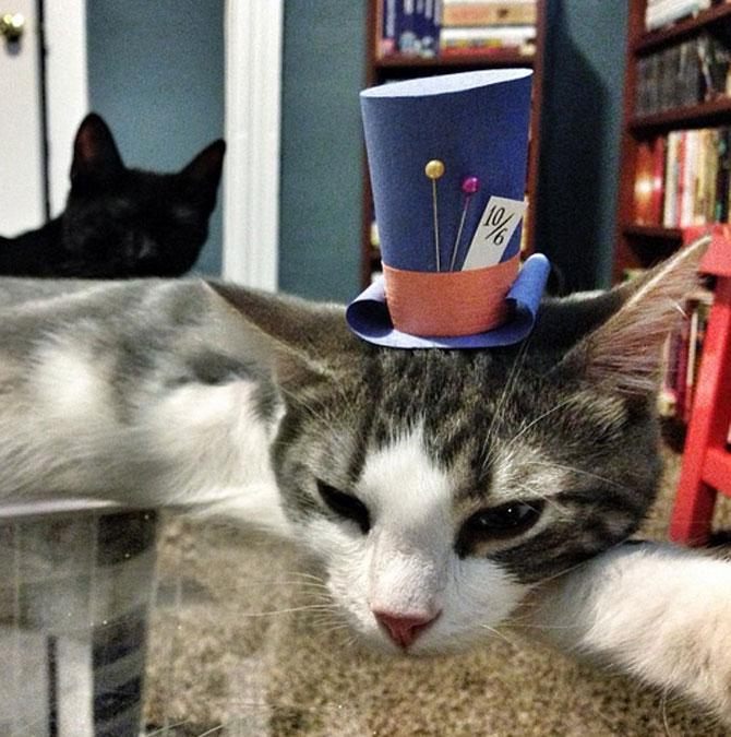 10 pisici cu palarie! - Poza 3