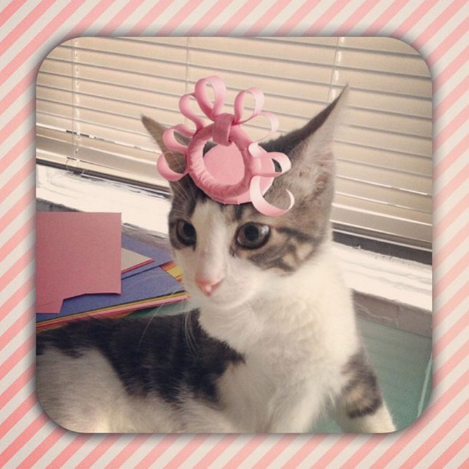 10 pisici cu palarie! - Poza 4