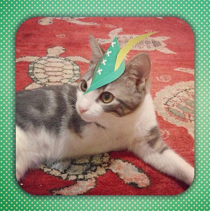 10 pisici cu palarie! - Poza 6