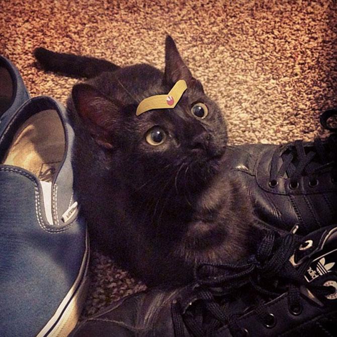 10 pisici cu palarie! - Poza 8
