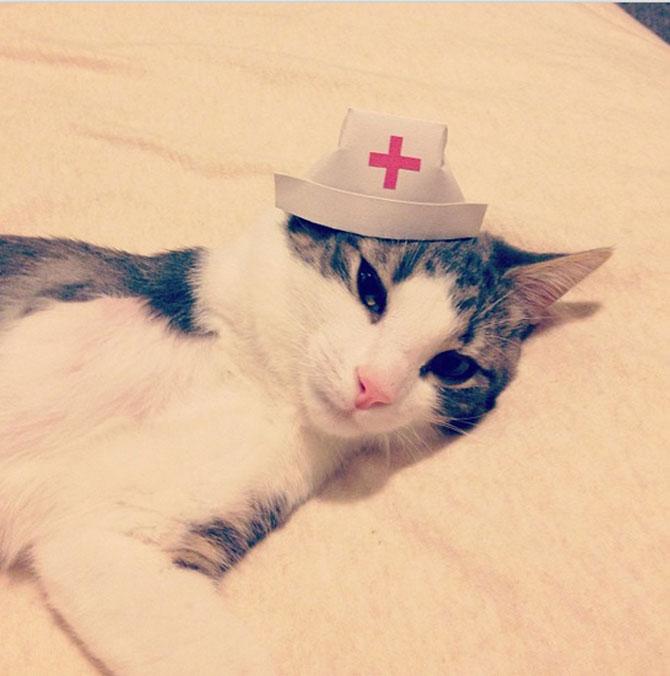 10 pisici cu palarie! - Poza 9