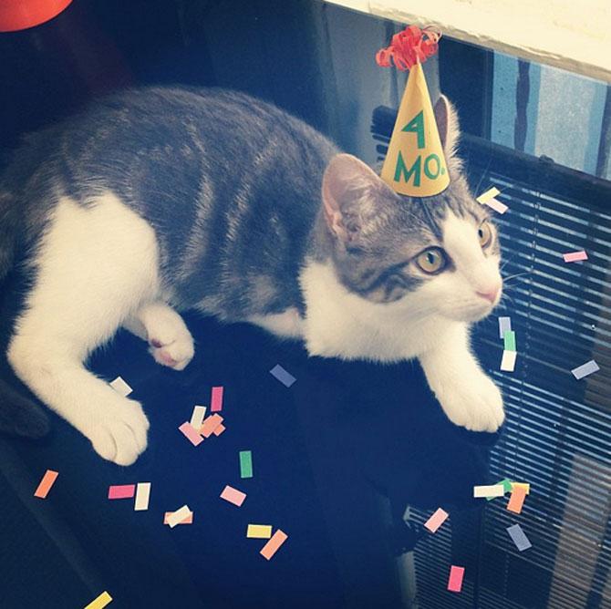 10 pisici cu palarie! - Poza 10