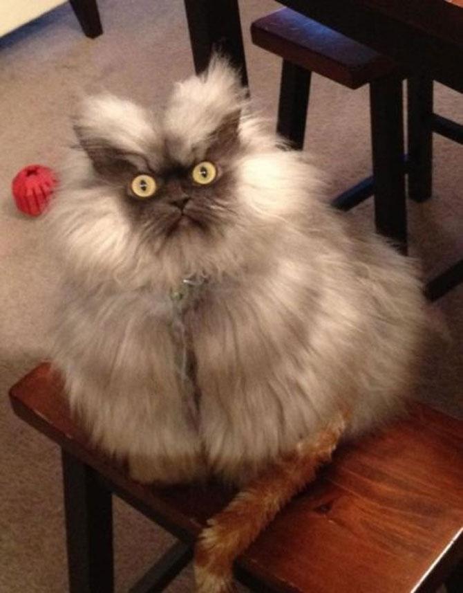 10 pisici amuzante culese de pe net - Poza 3