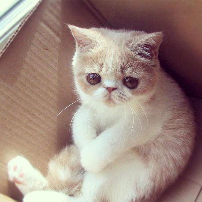 10 pisici amuzante culese de pe net - Poza 5