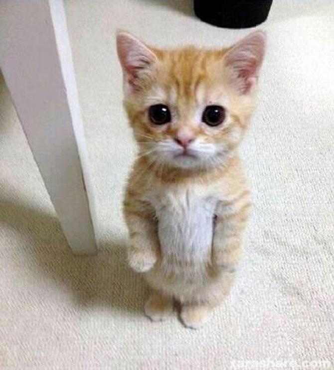 10 pisici amuzante culese de pe net - Poza 6