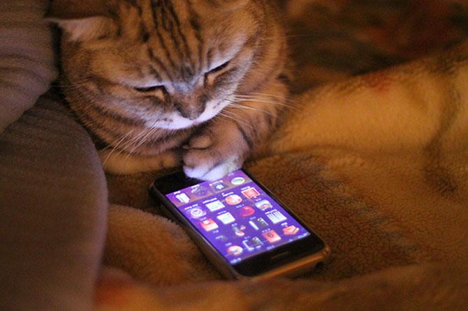 10 pisici amuzante culese de pe net - Poza 9