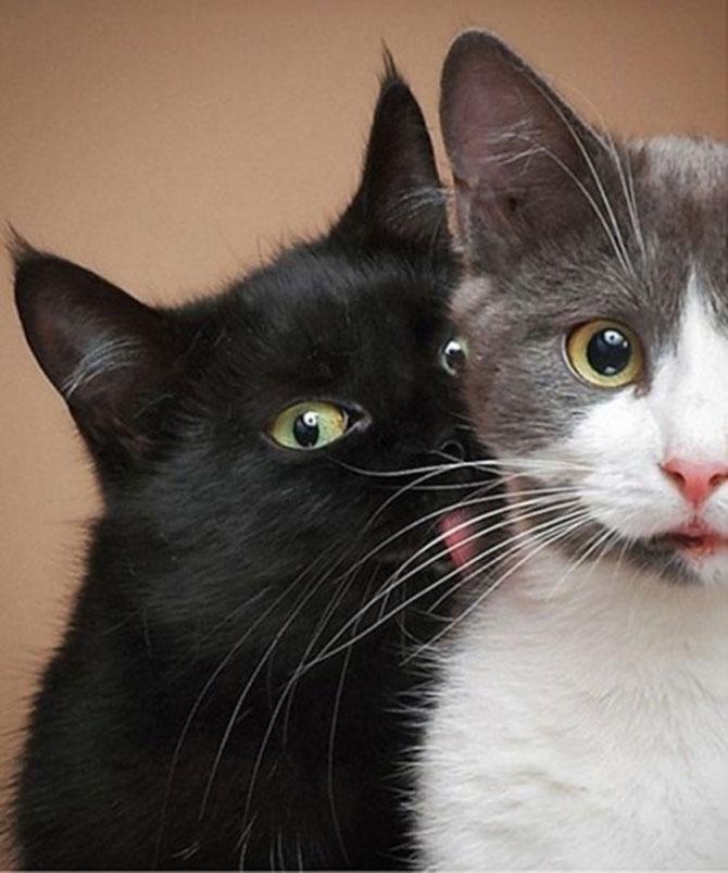 10 pisici amuzante culese de pe net - Poza 10