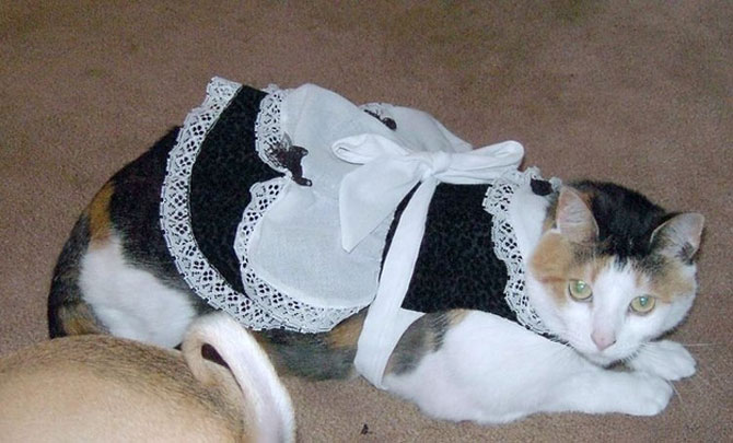 10 pisici in costume de Halloween - Poza 1