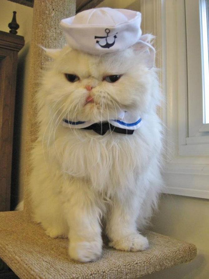 10 pisici in costume de Halloween - Poza 6