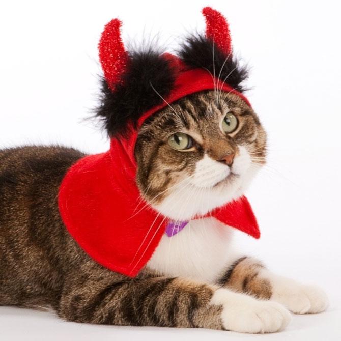 10 pisici in costume de Halloween - Poza 9