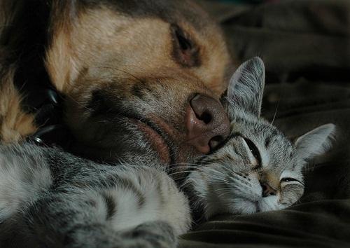 Caini si pisici in 22 de fotografii - Poza 8