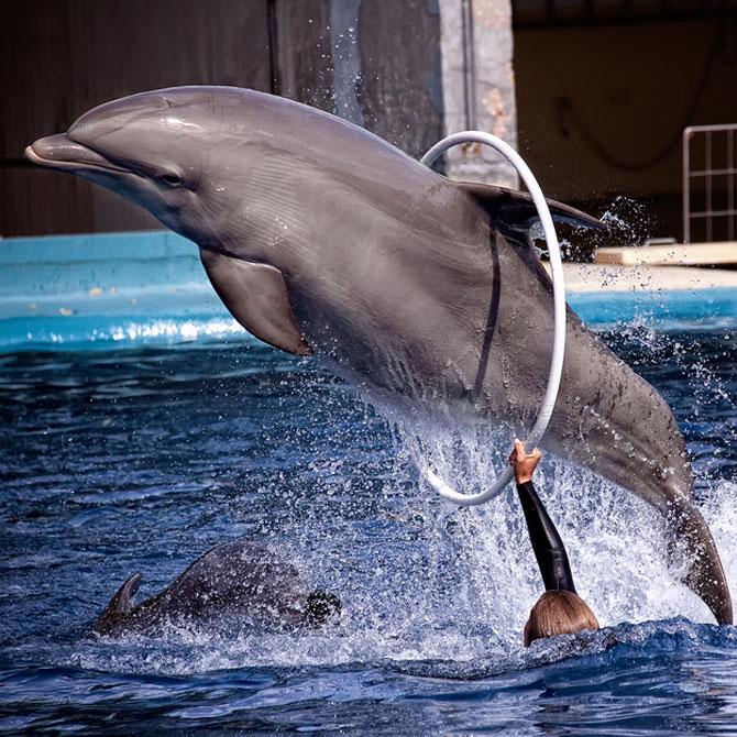 5 fotografii spectaculoase cu delfini - Poza 1