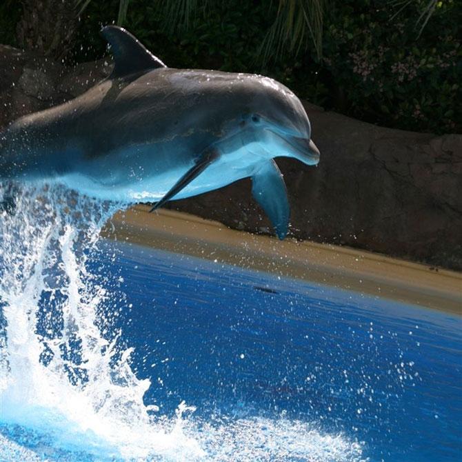 5 fotografii spectaculoase cu delfini - Poza 2