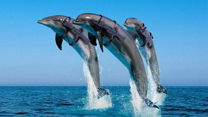 5 fotografii spectaculoase cu delfini - Poza 5