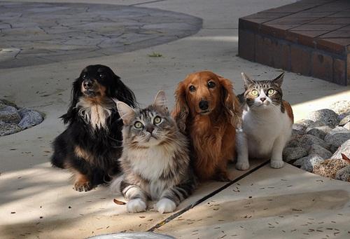 Caini si pisici in 22 de fotografii - Poza 20