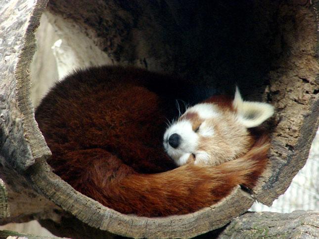 17 poze cu animale fericite - Poza 7