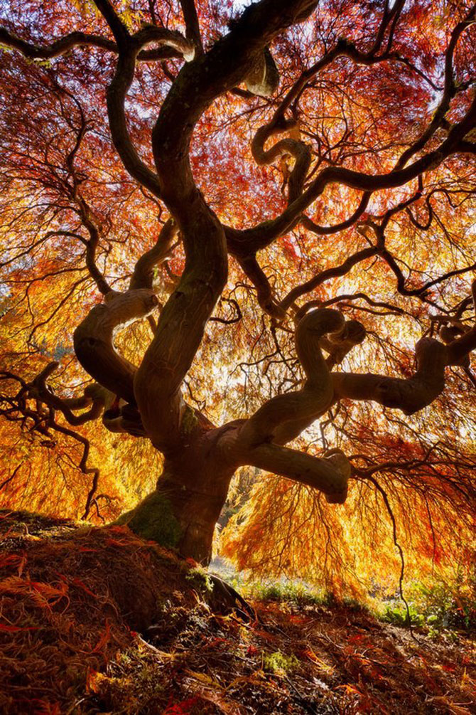 12 poze superbe cu copaci toamna - Poza 1