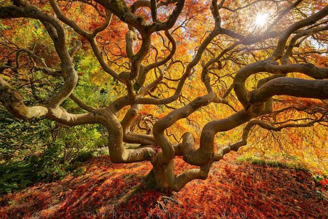 12 poze superbe cu copaci toamna - Poza 2