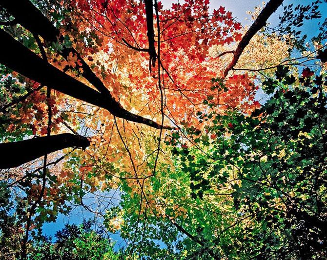 12 poze superbe cu copaci toamna - Poza 3