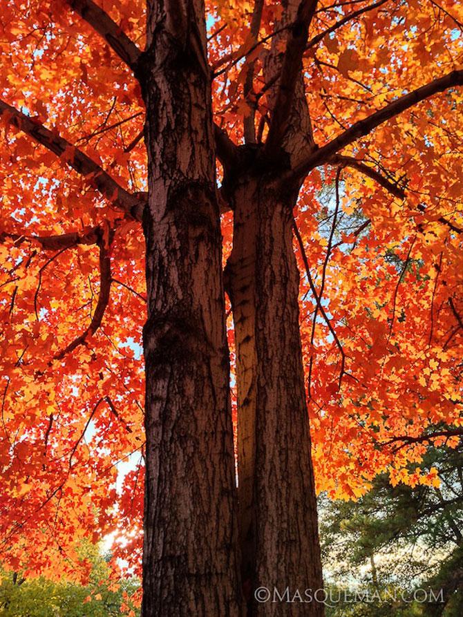 12 poze superbe cu copaci toamna - Poza 4